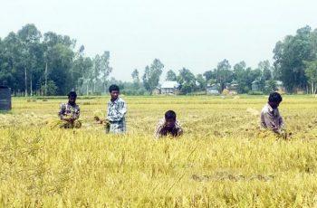 ঈদ আনন্দ নেই টাঙ্গাইলে কৃষকদের ঘরে