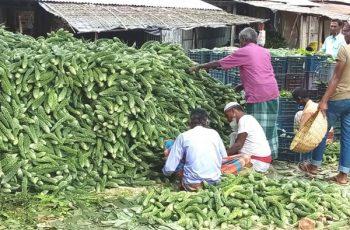 ময়মনসিংহে ৩ টাকা কেজি করলা